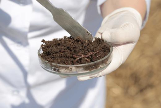 Рідкі органічні добрива від виробника