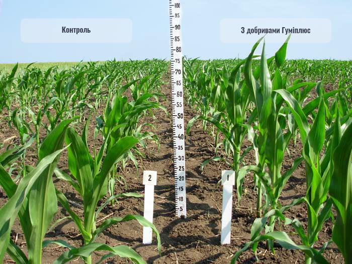 Добрива Гуміплюс для кукурудзи