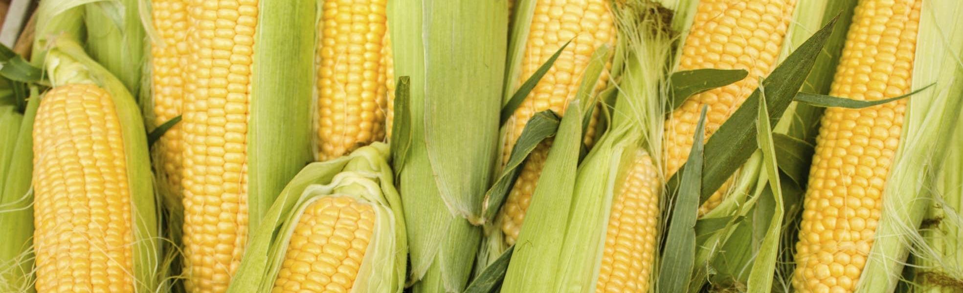 Гумісол 03 Кукурудза допоможе подолати стрес рослини